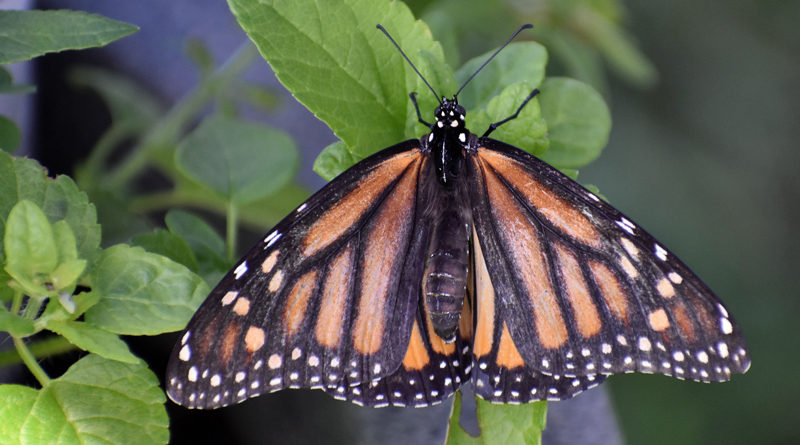 2021 Butterfly Field